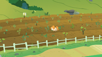 Pear Butter pulling weeds in the pear fields S7E13