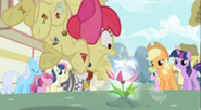 204px-Apple Bloom pounces S02E06