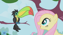 Fluttershy looks at a Toucan S1E03