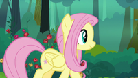 Fluttershy walking down the forest path S8E13