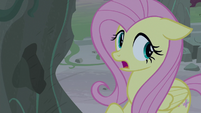 "Fluttershy ""find out what happened here"" S7E25"