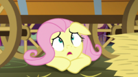 Fluttershy looks up at Granny Smith S5E21