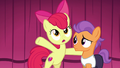 "Apple Bloom ""I'm here to convince you"" S6E4.png"