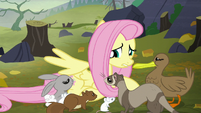 Fluttershy --and you're freezing!-- S5E23