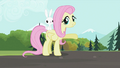 Fluttershy 'waiting for you' S2E07.png