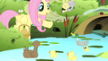 Fluttershy giving grains to ducks S4E14.png