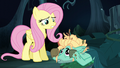 """Fluttershy """"you're smart and talented"""" S6E11.png"""