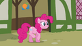 Pinkie Pie 'What a cute orange birdy' S3E3.png