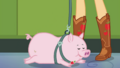 Applejack's pig lying on the hallway floor EGDS4.png
