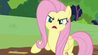 Fluttershy -what animals need is a sanctuary- S7E5