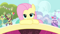 Fluttershy smile S4E14.png