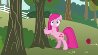 Pinkie Pie cute reaction S3E13