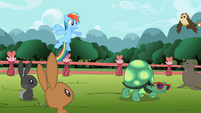 Rainbow Dash 'of speed' S2E07