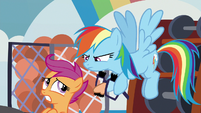 Rainbow glares at Scootaloo in disapproval S8E12