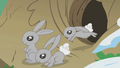 Bunnies coming out of the burrow S01E11.png