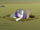 Diamond Dogs drag Rarity into the cave system S1E19.png