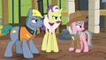 Expert ponies offended by Fluttershy's opinion S7E5.png