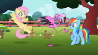 Fluttershy, Rainbow Dash and flamingo S2E07