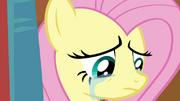 Fluttershy chorando T4E16
