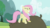 Fluttershy stomping on bear S2E03