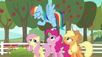 Rainbow Dash --I'm kind of an expert-- S6E18