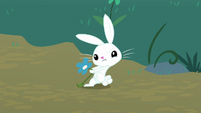 Angel Bunny picking a flower S8E18