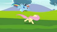 S02E22 Rainbow próbuje przekonać Fluttershy by nie uciekała