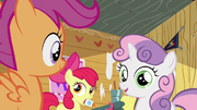 S2E17 Scootaloo, Apple Blomm i Sweetie Belle