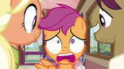 Scootaloo starting to look panicked S9E12