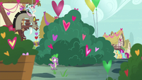 Spike and Discord pass by a bush of hearts S8E10