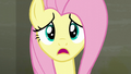 "Fluttershy ""I asked the raccoons to leave"" S6E9.png"