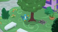 Gallus talking to a tree S8E22