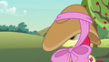 Apple Bloom's hat obscuring her eyesight S7E9.png