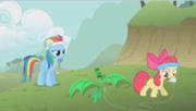 Apple bloom entrenando con rainbow dash