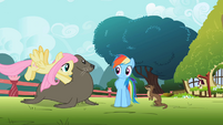 Fluttershy pushing seal S2E07