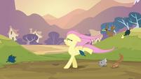 Fluttershy walking on her two front legs S2E22