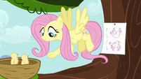Fluttershy demonstrating flight S4E04