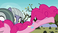 Pinkie Pie tackling Limestone and Marble S8E3.png