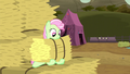 Florina catches the hay bale S5E6.png