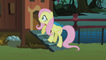 Fluttershy checks the chicken coup for the CMC S1E17.png