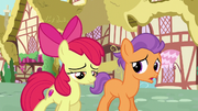 Tender Taps talks with Apple Bloom S6E4
