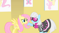 Fluttershy and Photo Finish S1E20.png