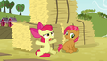 Apple Bloom 'but that was ridiculous!' S3E08.png