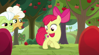 Apple Bloom looking at the patterns S9E10