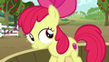 Apple Bloom looks at other ponies S6E4.png