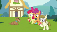CMC and Zipporwhill with Ripley and dog toys S7E6