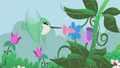 Hummingbirds that can really hum S1E03.png