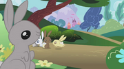 Bunnies hopping around S1E04