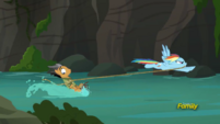 Quibble Pants water-skiing with Rainbow Dash S6E13