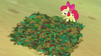Apple Bloom making a pit trap S9E10
